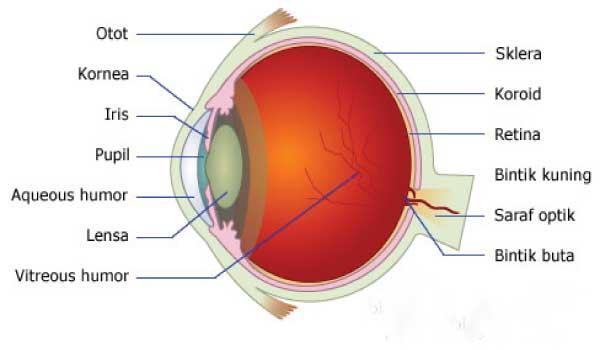 Contoh Makalah Fisika Tentang Alat Optik Mata Terbaru