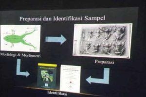 Contoh Makalah Penelitian Biologi
